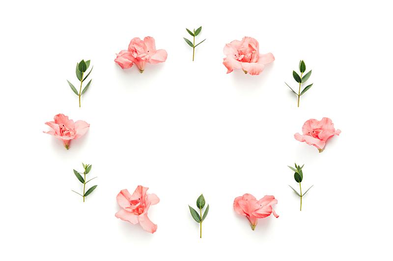 边框,柔和,叶子,绿色,白色背景,粉色,美,贺卡,留白,椭圆形