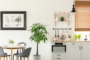 椅子,明亮,植物,清新,木制,室内,粉色,厨房器具,极简构图