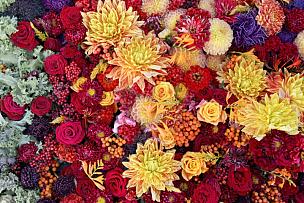 明亮,水平画幅,茶花,无人,苔藓,紫苑,户外,花束,拉脱维亚,菊花