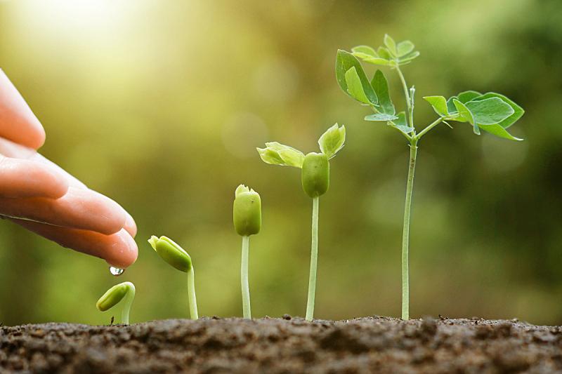 农业,种子,肥料,秧苗,树苗,环境保护,菜园,堆肥,泥土,绿色