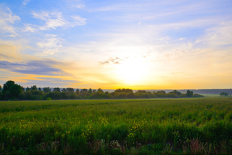 草,野花,黎明,自然,水平画幅,无人,蓝色,户外,田园风光,日落