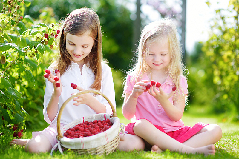夏天,小的,可爱的,有机食品,浆果,姐妹,农场,覆盆子,清新,采摘