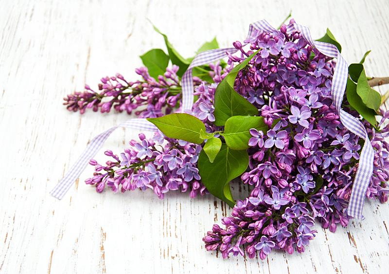 丁香花,芳香的,水平画幅,无人,夏天,花束,花蕾,植物,过时的,缎带