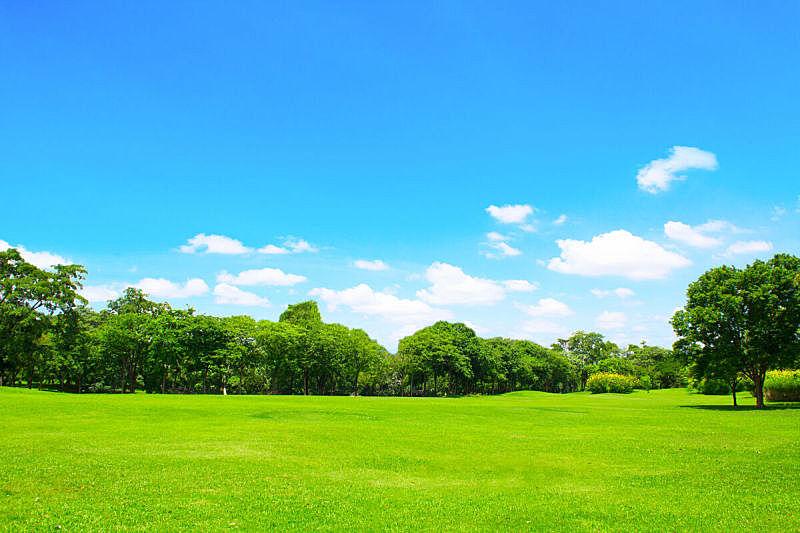 天空,蓝色,格林公园,美,公园,水平画幅,枝繁叶茂,无人,草坪,夏天