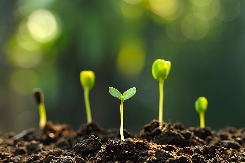 绿色,秧苗,水,新的,水平画幅,无人,泥土,组物体,想法,花蕾