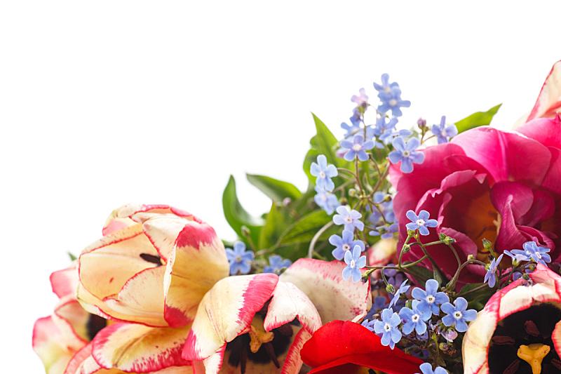 花束,春天,勿忘我,美,水平画幅,郁金香,无人,夏天,特写,白色