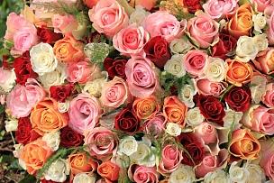 玫瑰,多样,花束,自然,红色,白色,水平画幅,无人,粉色,延龄草