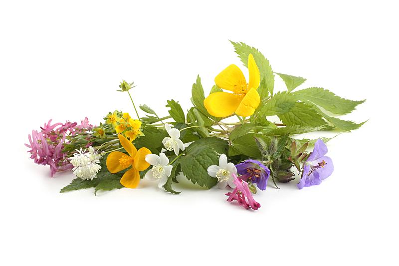 白色背景,野生植物,森林,分离着色,仅一朵花,美,水平画幅,无人,蓝色,阴影
