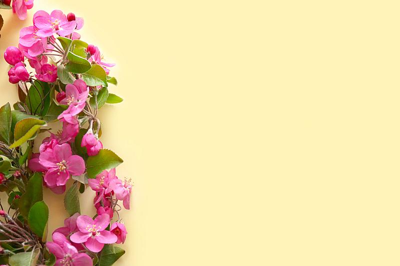 彩色背景,花朵,枝,自然美,自然,季节,粉色,乌克兰,图像,美