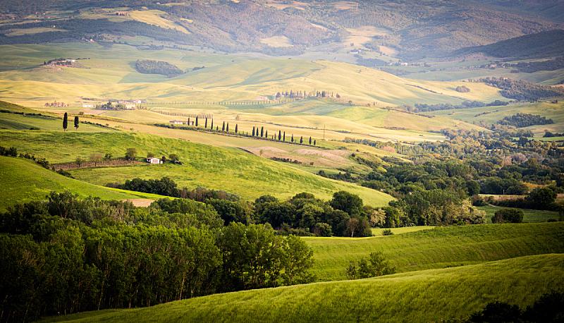 地形,托斯卡纳区,美,干草,水平画幅,山,油橄榄树,早晨,夏天,户外