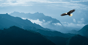鹰,山,早晨,雾,在上面,鸟类,风景,高大的,天空,老鹰