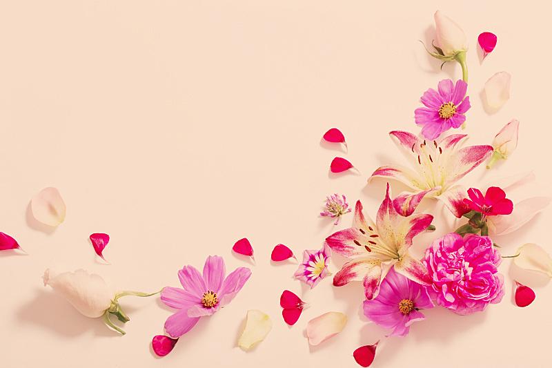 夏天,白色背景,边框,水平画幅,无人,符号,百合花,花束,白色,植物
