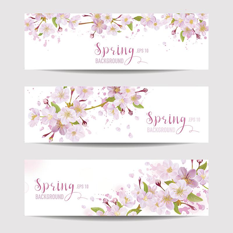 樱花,春天,背景,贺卡,复活节,艺术,樱桃,无人,绘画插图