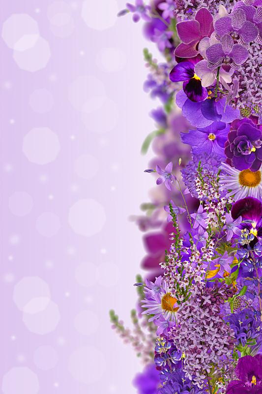 丁香花,彩色图片,垂直画幅,兰花,石南花,紫罗兰,石南科灌木,无人,组物体,花