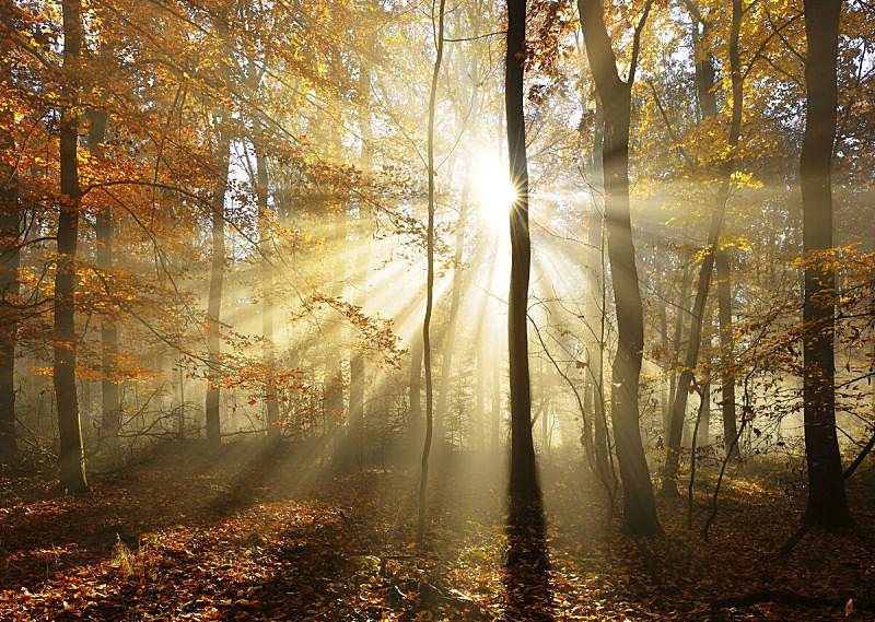 阳光光束,森林,秋天,叶子,雾,改换颜色,灵性,树林,超自然,童话故事