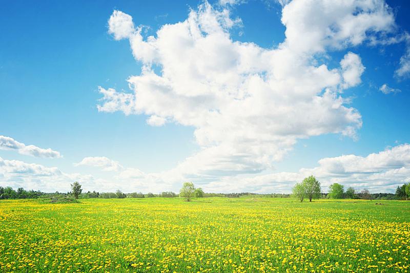 蒲公英,田地,天空,蓝色,周末活动,热,云景,家庭,云,草
