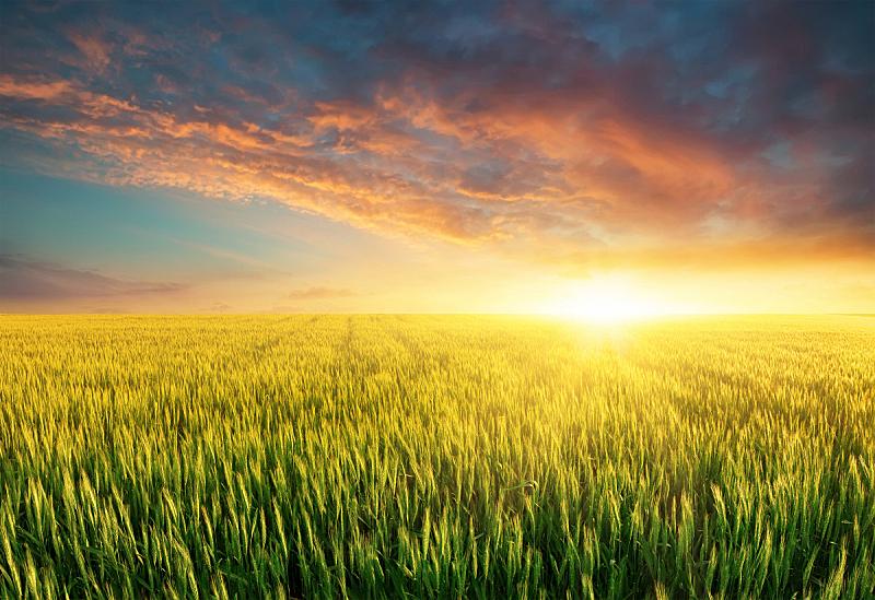 地形,农业,天空,夏天,草,气候与心情,彩色图片,地平面,黑云压城,雾