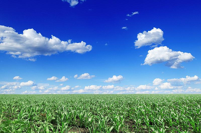 田地,玉米,天空,水平画幅,无人,夏天,户外,云景,植物,生长