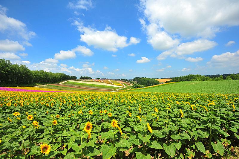 北海道,田地,日本,富良野盆地,天空,美,里山,水平画幅,山,无人