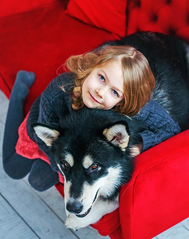 圣诞树,狗,女孩,垂直画幅,美,传统,圣诞礼物,居住区,阿拉斯加雪橇犬