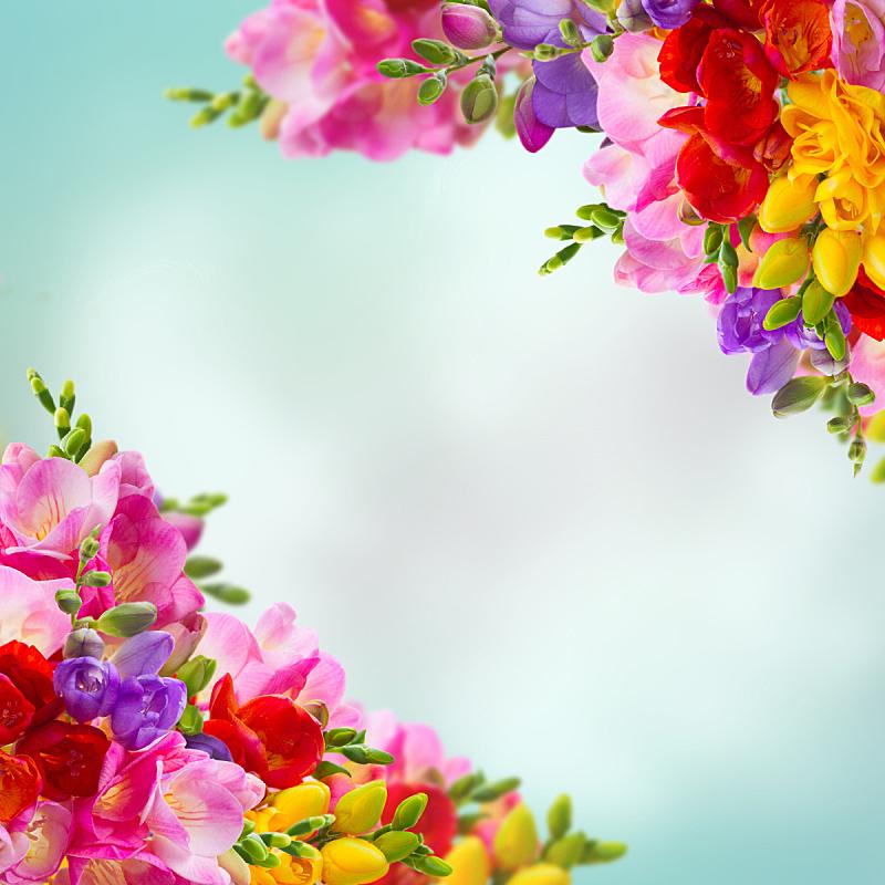 小苍兰,清新,美,留白,复活节,边框,无人,花束,花蕾,白色