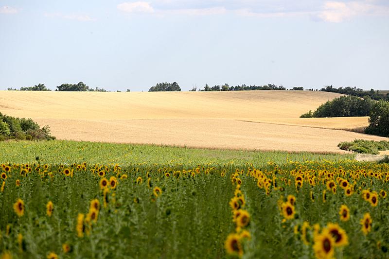 熏衣草,薰衣草色,农业,法国,香水,芳香疗法,春天,植物,夏天,户外
