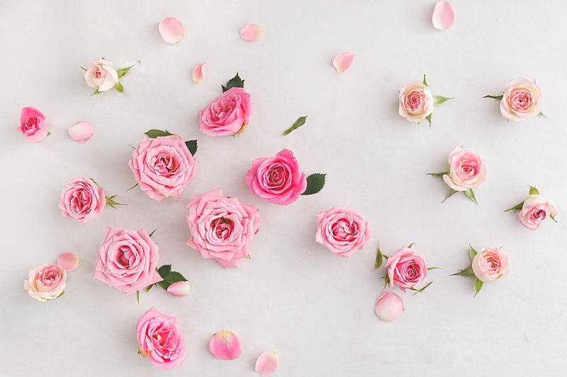 玫瑰,动物头,多样,贺卡,留白,水平画幅,高视角,无人,健康,组物体
