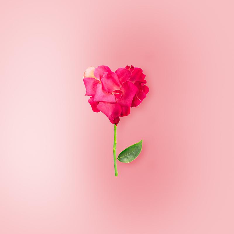 玫瑰,红色,白色背景,分离着色,粉色,美,贺卡,情人节,符号,夏天