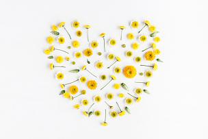 符号,黄色,心型,白色背景,多样,雏菊,甘菊,花蕾,花环,情人节