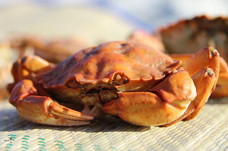螃蟹,洛伊斯·特斯特,韧性,水平画幅,动物,海产,户外,贝壳,海洋,捕蟹
