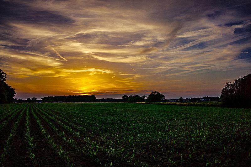 北莱茵威斯特法伦州,天空,水平画幅,无人,泥土,夏天,户外,田地,植物,地平线
