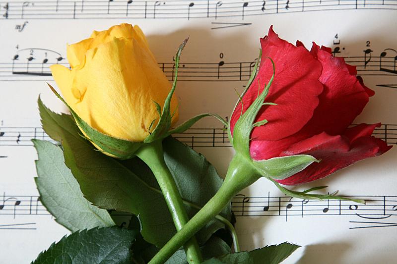 红色,黄色,音乐,玫瑰,水平画幅,时间,部分,白色,高处,彩色图片