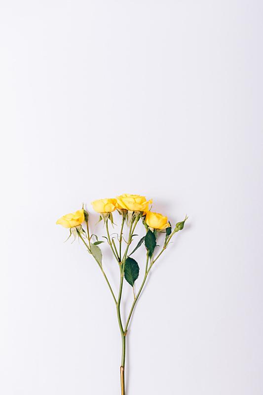 垂直画幅,小的,玫瑰,黄色,美,贺卡,情人节,符号,夏天,明亮