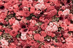 特写,仅一朵花,抽象,背景,自然,式样,水平画幅,无人,紫苑,浪漫
