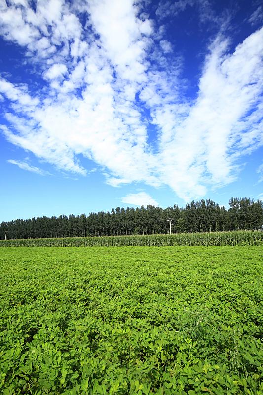 花生,田地,垂直画幅,无人,生食,户外,农作物,植物,商业金融和工业