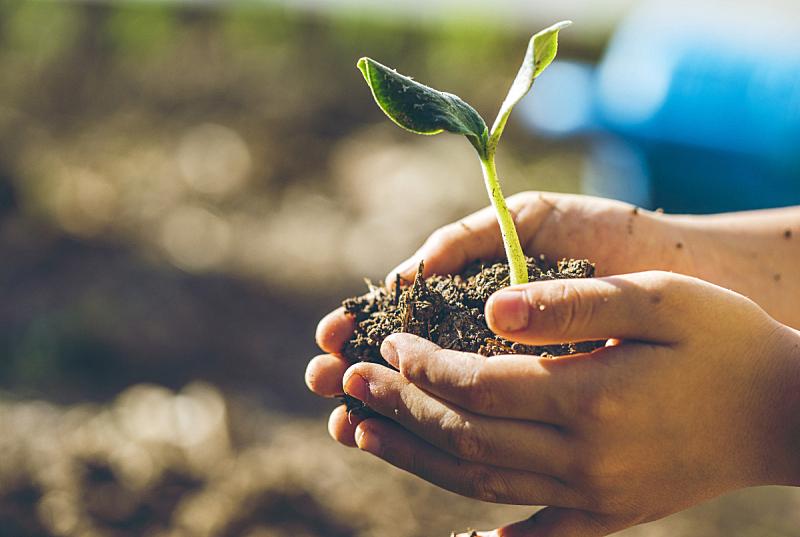 秧苗,男孩,环境保护,责任,食品,泥土,安全,拿着,盆栽,肮脏的