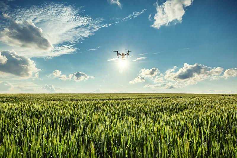 噪声,绿色,小麦,田地,天空,早晨,夏天,无人机,农作物,技术