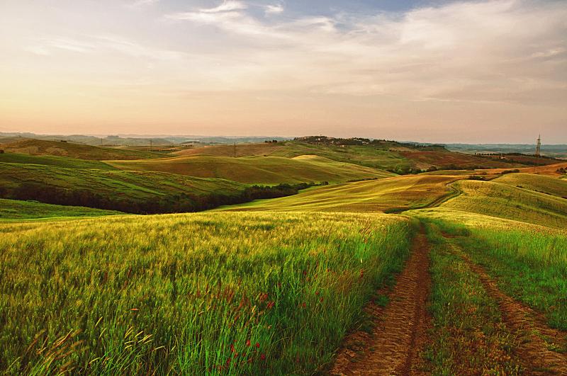 拖拉机,绿色,田地,成一排,水平画幅,山,无人,夏天,户外,草