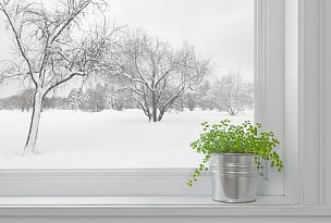 植物,冬天,绿色,地形,拉凡他那石拱,看,花盆,舒服,一月,边框