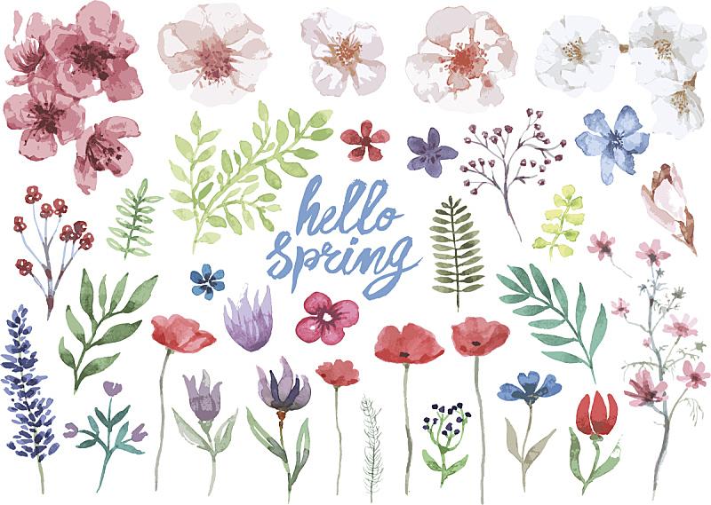 春天,花纹,水彩画,雏菊,水彩画颜料,矢量,枝,彩色图片,简单,保加利亚