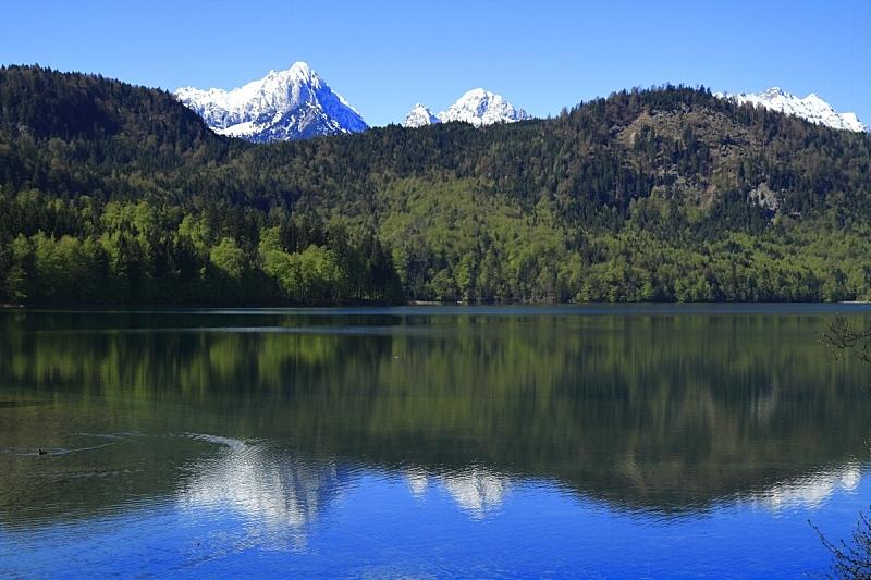 阿尔普斯湖,旧天鹅堡,水,施万高,夏天,湖,巴伐利亚,都市风景,建筑业,国际著名景点