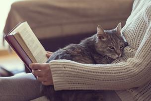 猫,业主,休闲活动,爪子,家庭生活,动物身体部位,哺乳纲,毛绒绒,书,条纹