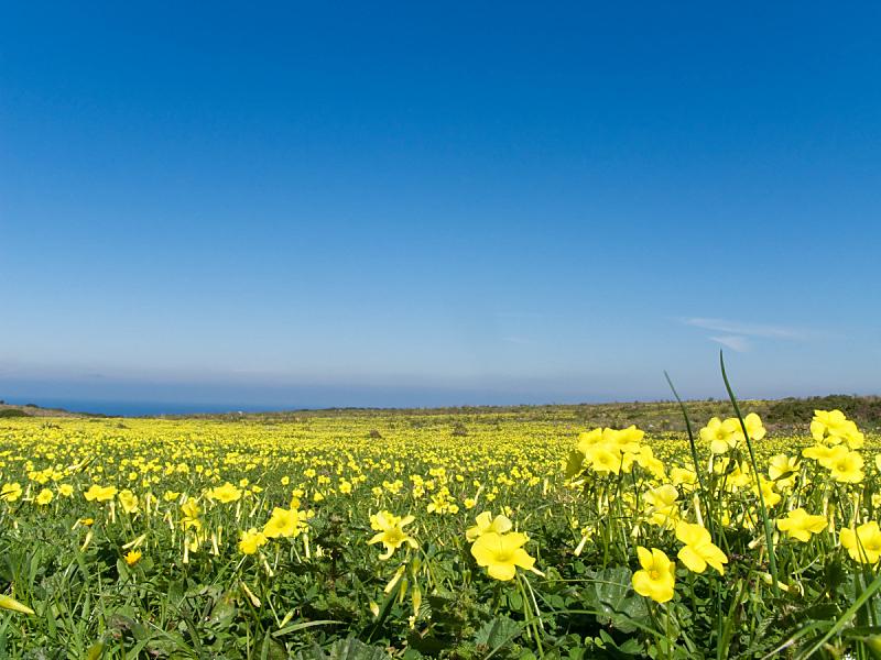 草地,春天,黄色,充满的,天空,美,水平画幅,无人,夏天,户外