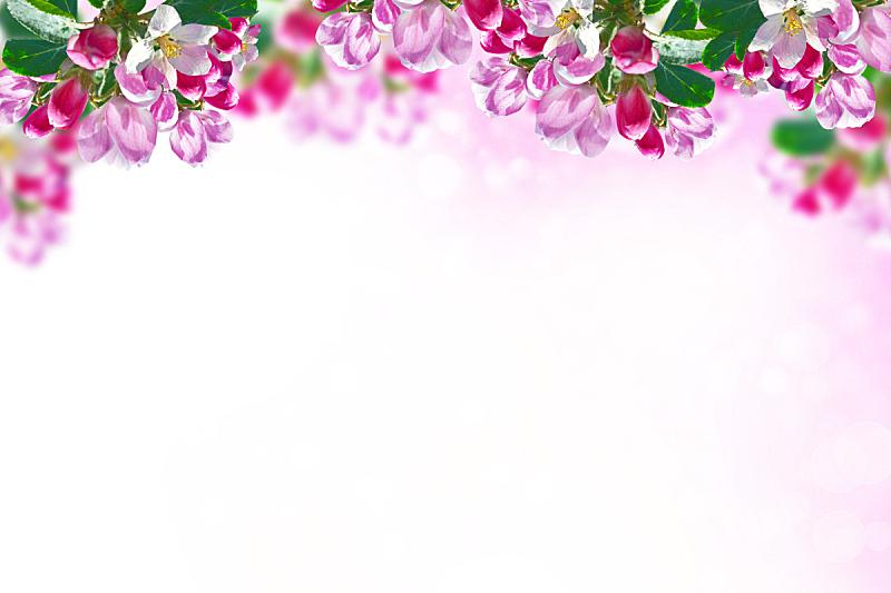 色彩鲜艳,明亮,梨树,果园,天空,边框,水平画幅,樱花,樱桃,无人
