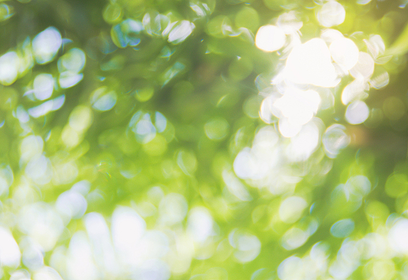 背景,背景虚化,阳光光束,叶子,散焦,环境保护,太阳,日光,清新,森林