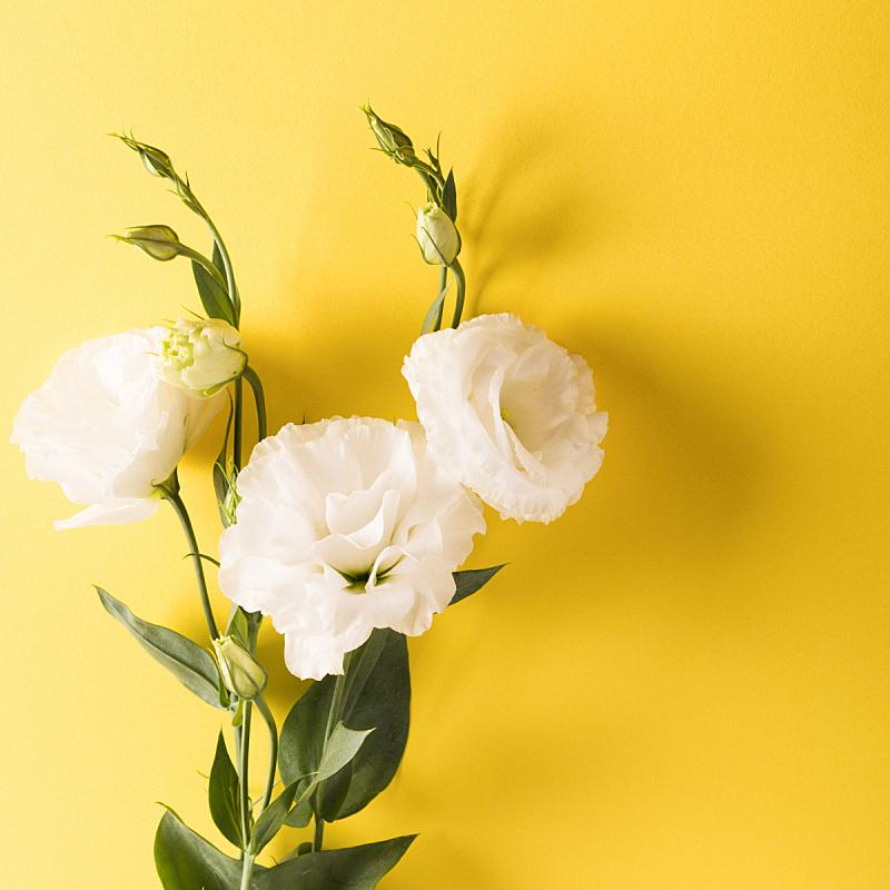 白色,洋桔梗,方形画幅,明亮,黄色背景,可爱的,请柬,事件,边框,母亲