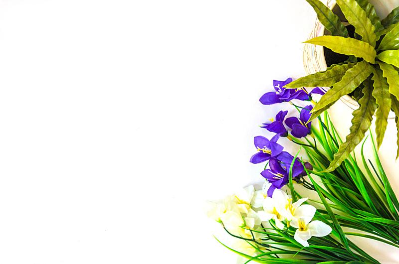 白色背景,美,水平画幅,动物身体部位,夏天,图像,特写,泰国,明亮,植物