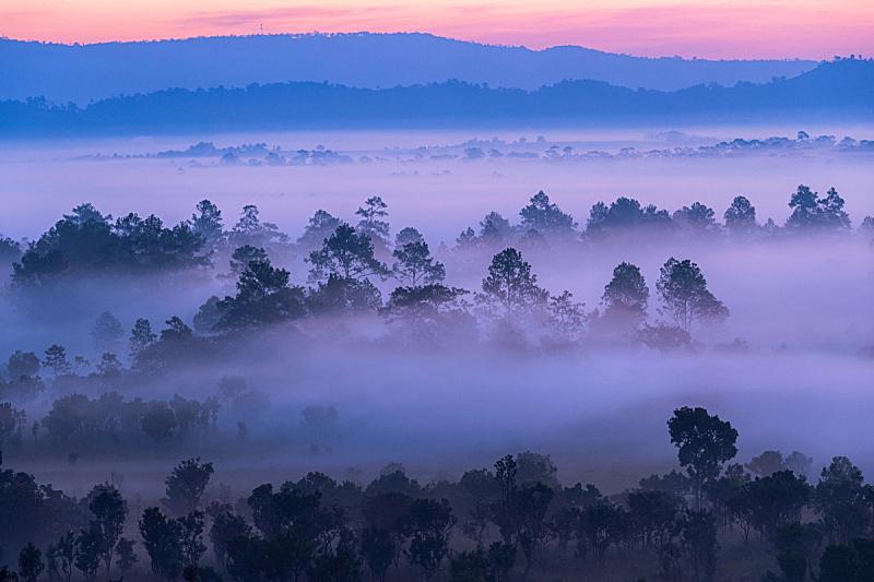 自然美,松树,雾,黎明,地形,森林,山,早晨,旅途,云景