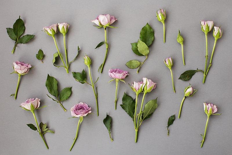 蓝色,玫瑰,叶子,灰色背景,公亩,混沌,式样,灰色,水平画幅,绿色