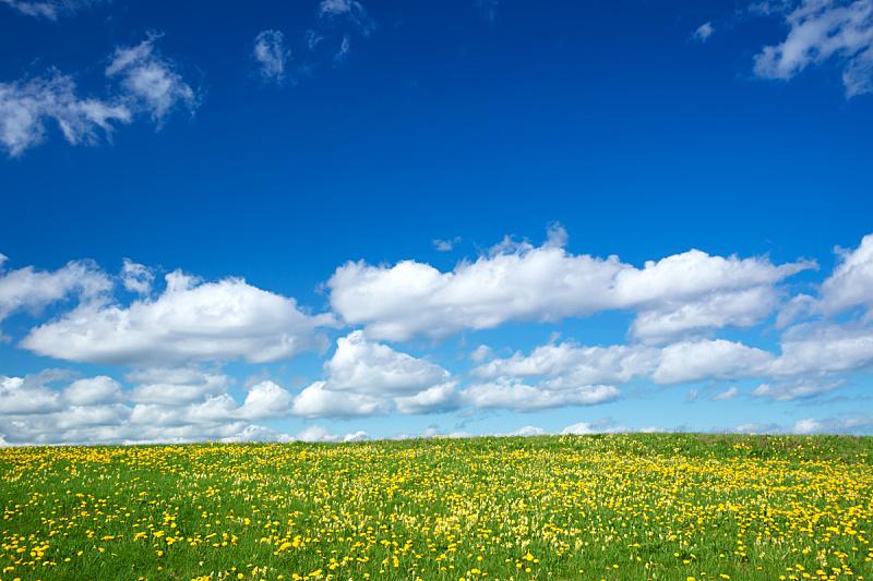 天空,蒲公英,田地,蓝色,云,周末活动,热,云景,家庭,草